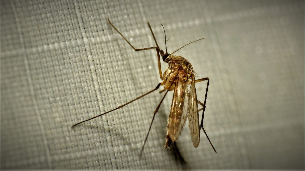 Get rid of mosquitoes naturally